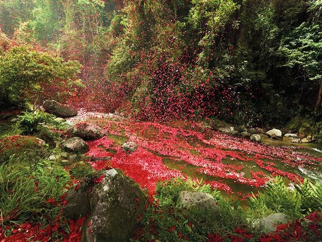nick-meek-photographs-flower-petals-in-HD-01