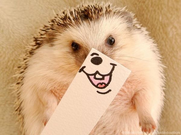 Marutaro-The-Hedgehog-1-600x448