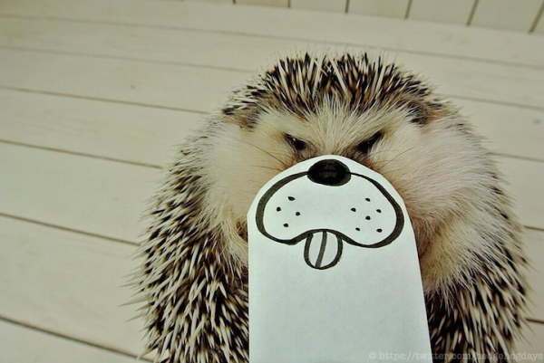 Marutaro-The-Hedgehog-10-600x401