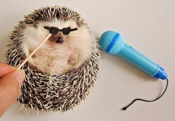Marutaro-The-Hedgehog-13-600x416