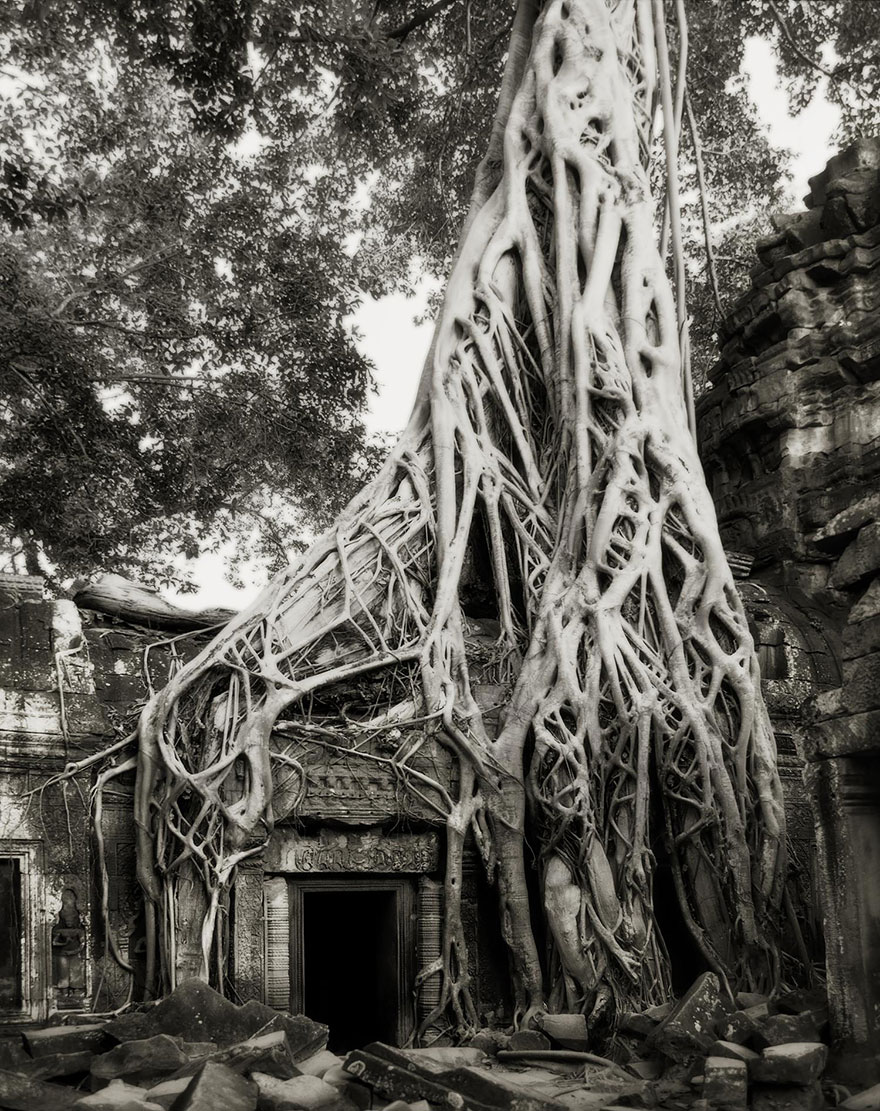 ART ancient-trees-beth-moon-13