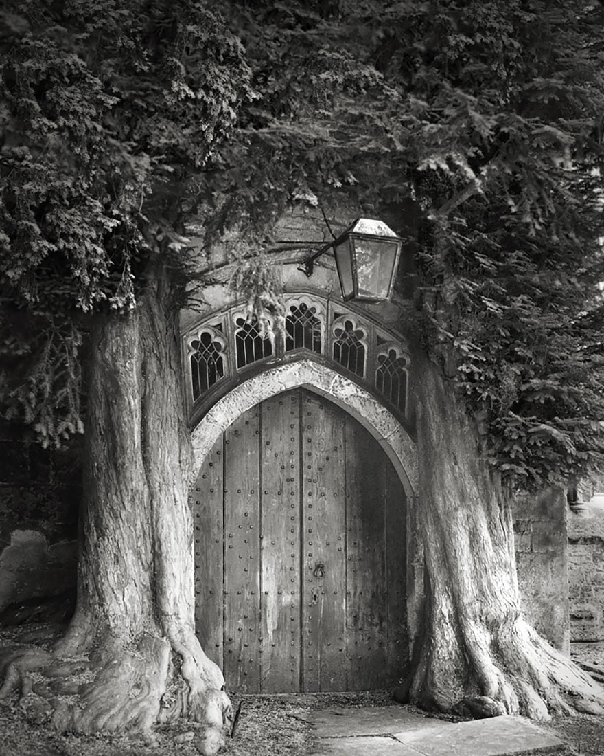 ART ancient-trees-beth-moon-6