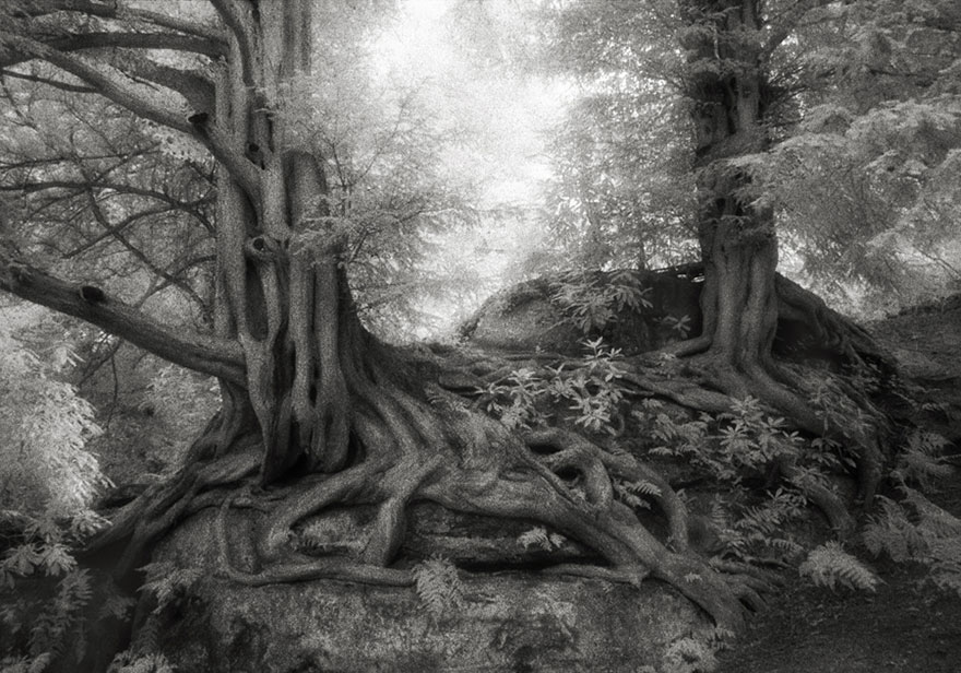 ART ancient-trees-beth-moon-7